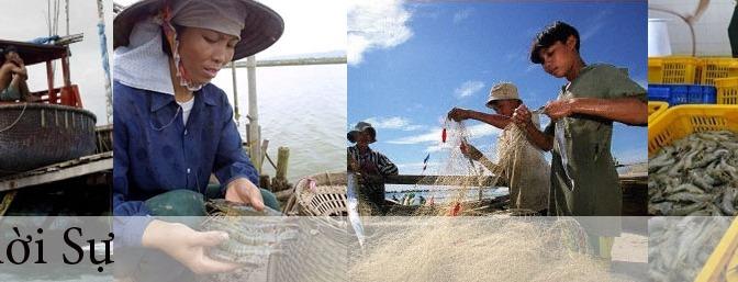VN ban hành Bộ quy chuẩn mới cho ngành thủy sản