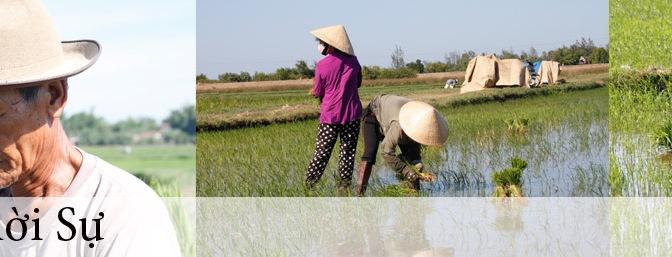 Vựa lúa xuất khẩu và trận lũ 10 năm