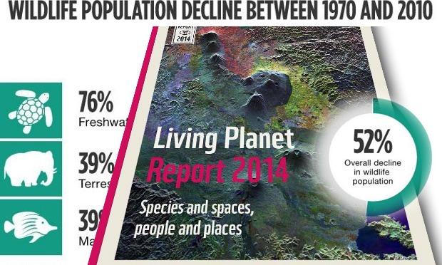 WWF cảnh báo động vật hoang dã trên thế giới giảm hơn phân nửa