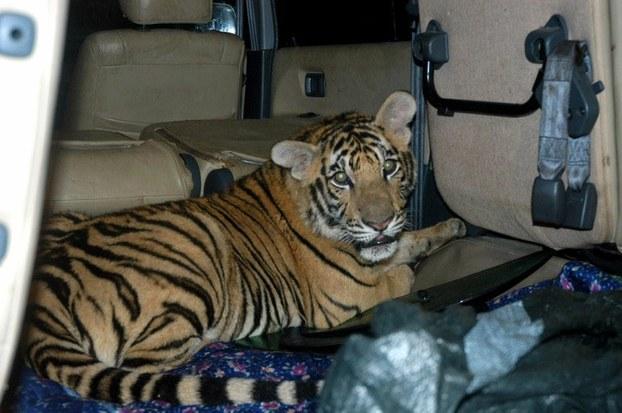 Nạn buôn bán động vật hoang dã đã giảm