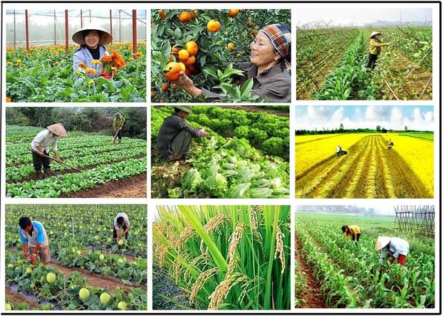 Đa dạng hóa nông nghiệp để đối phó với biến đổi khí hậu